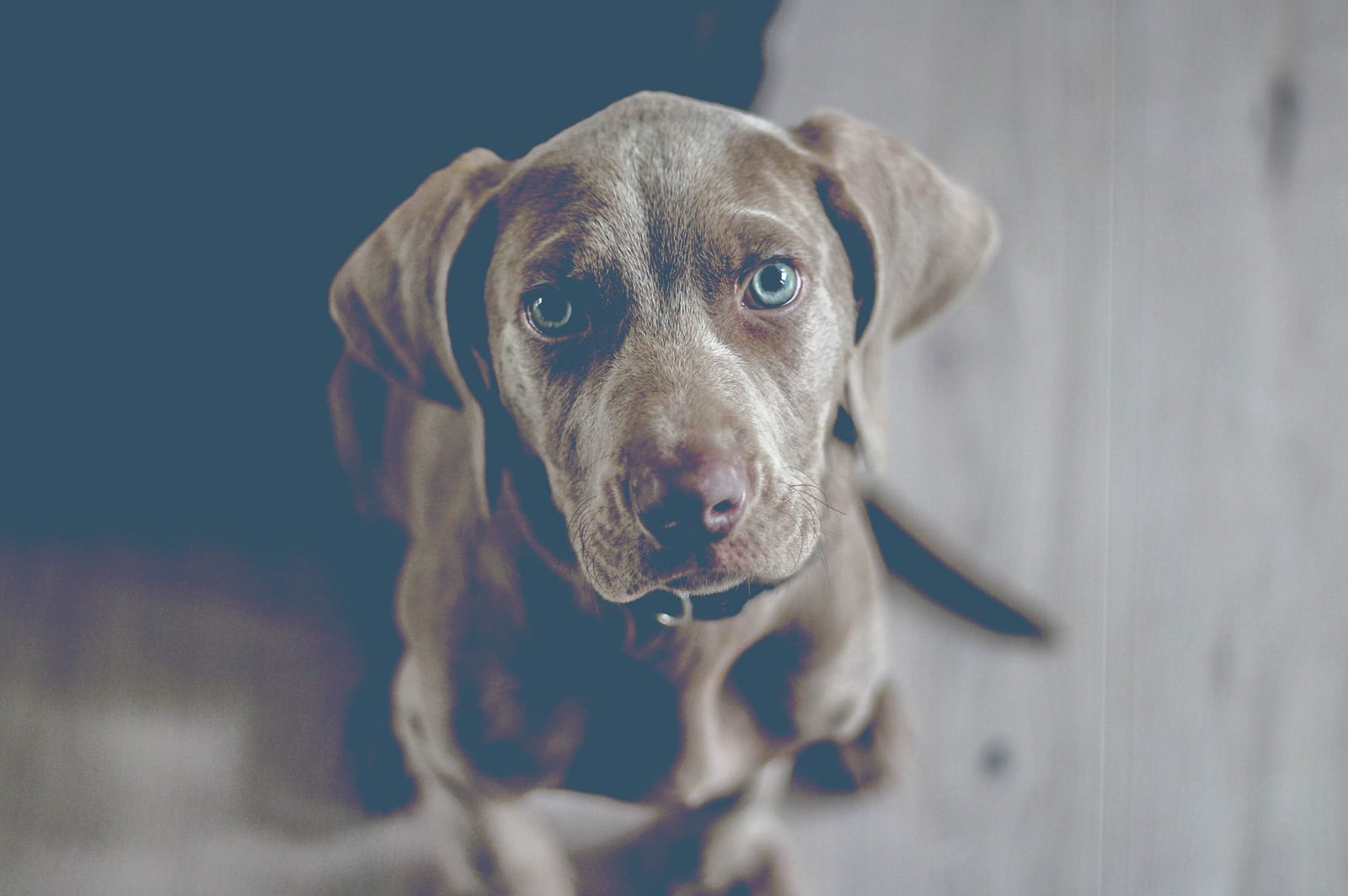 How To Pick a Puppy That Fits Your Lifestyle