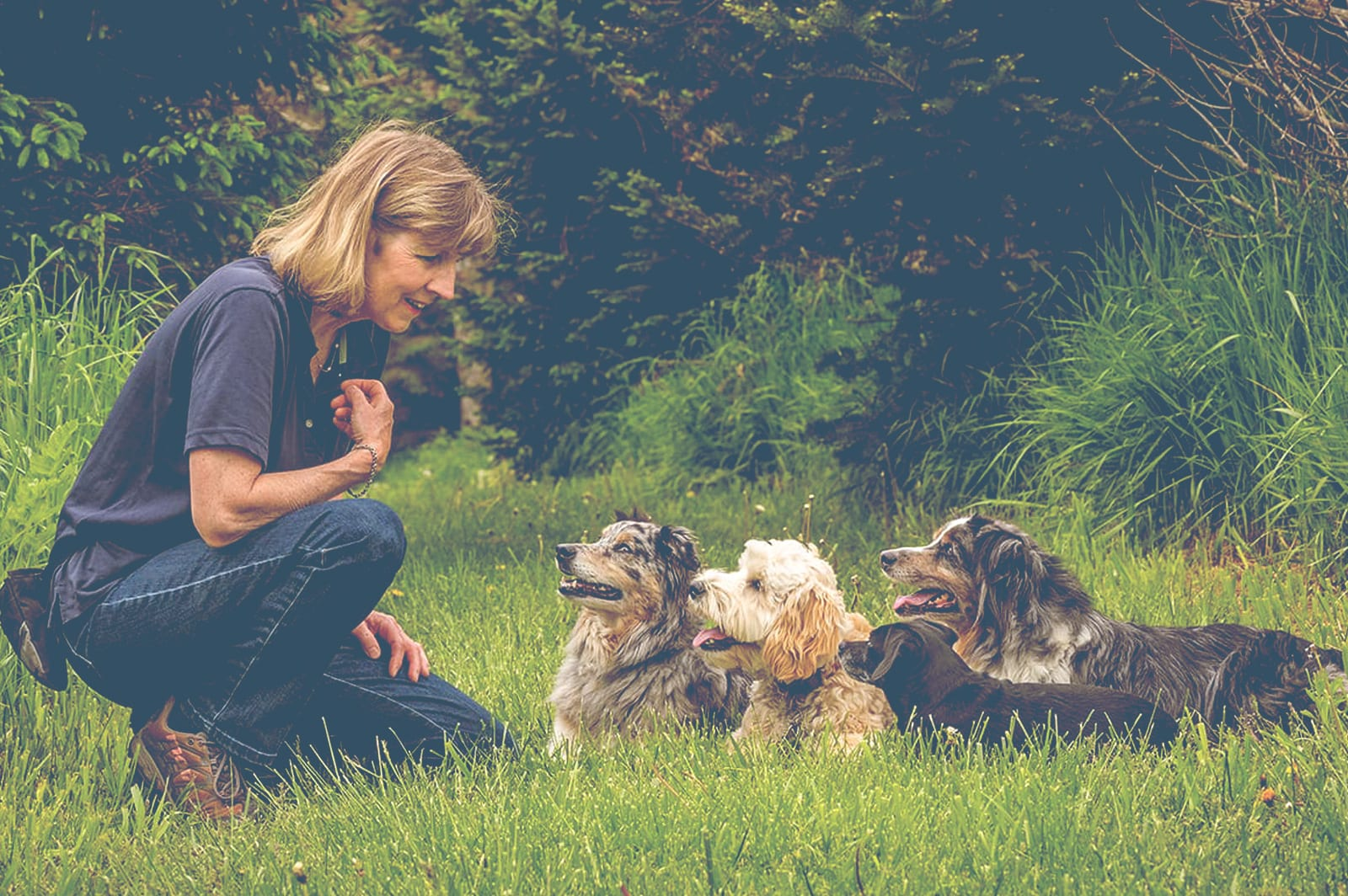 Trained Family Dogs: Get Your Money's Worth